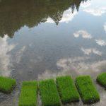 田んぼに映りこむ空が美しい季節。2011/5