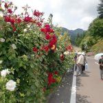 花工房のバラは6月頃がさかり。赤、ピンク、白、様々な色のバラが咲きます。2010/6/11