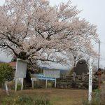 下手渡藩の陣屋跡に咲く桜。石碑の建てられたころに植えられたのでしょうか。2010/4/13