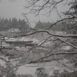 雪の季節。しんしんと雪に降られながら春を待ちます。2009/12/19