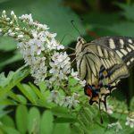 つきだての虫達は無防備なので簡単に写真を撮らせてくれます。2010/7/7