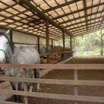 馬の他にも、ポニー、豚も元気に駆け回ってます!